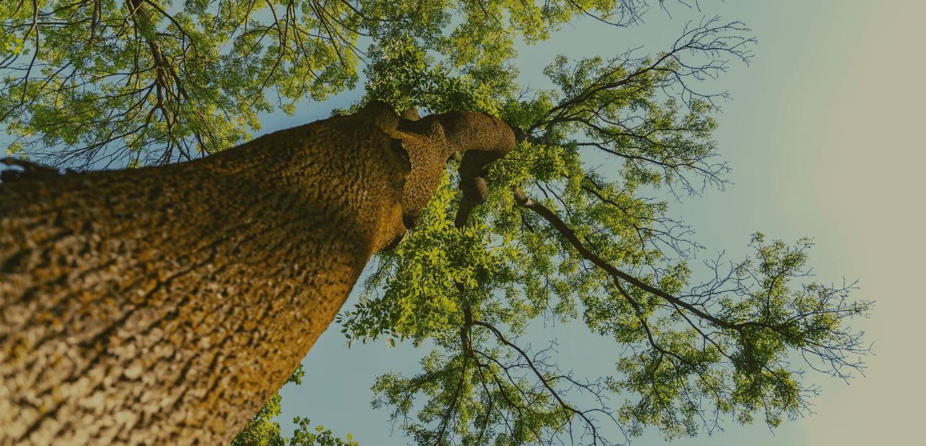Flexcube oak