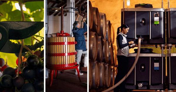 Flexcube Wine Harvest